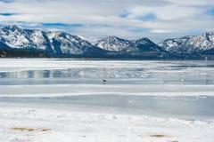使在冬天季节的湖视图靠岸与雪和鸟 库存图片