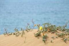 使在含沙小山的植被靠岸,与海在背景中 莎朗海滩自然保护,以色列 库存照片