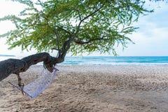 使在掌上型计算机沙子场面夏天树型视图白色的美好的梦想本质靠岸 在白色沙子海滩的美丽的树 库存图片