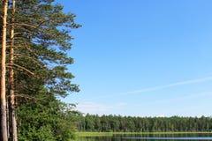 使在湖的蓝天,岸的具球果森林环境美化 免版税库存图片