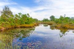使在酸值Kho Khao海岛的风景陷入沼泽 免版税库存图片
