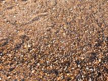 使地板背景纹理石头大卵石各种各样的湿太阳靠岸 库存照片