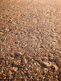 使地板背景纹理石头大卵石各种各样的湿太阳靠岸 免版税库存图片
