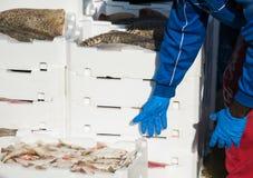 使堆的渔夫条板箱有很多新近地被抓的鱼 免版税图库摄影