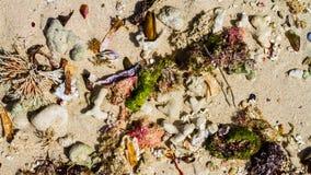 使壳靠岸 在海滩的对象 免版税库存照片