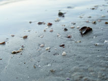 使壳靠岸 库存照片