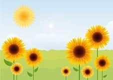使夏天向日葵环境美化 免版税库存图片