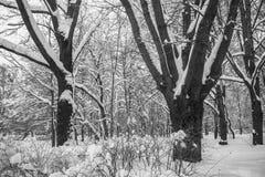 使多雪的城市公园荒凉在一个沉思平静的冬日 免版税图库摄影