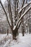 使多雪的城市公园荒凉在一个沉思平静的冬日 库存图片