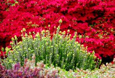 使弹簧环境美化 免版税库存图片