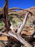 使曲拱和死的树,犹他,美国环境美化 图库摄影