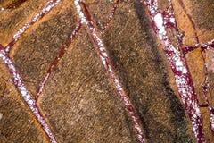 使有大理石花纹在温暖不同的颜色,设置与三十三张照片 免版税库存照片