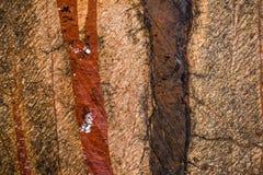 使有大理石花纹在温暖不同的颜色,设置与三十三张照片 库存照片