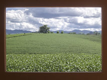 使有戏曲云彩的茶农场环境美化在红色框架 库存照片