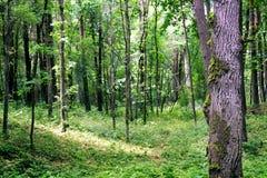 使木头环境美化 库存图片