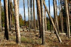 使树干环境美化 免版税库存图片