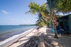 使棕榈树靠岸 免版税库存图片