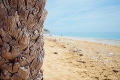 使棕榈树靠岸 库存图片