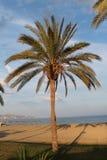 使棕榈树靠岸 免版税图库摄影
