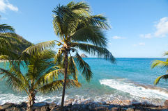 使棕榈树靠岸 免版税库存照片