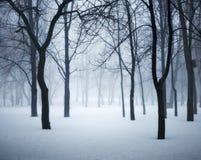使森林冬天模糊 有雾的树在冷的早晨 库存图片