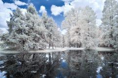 使森林和湖,红外照片环境美化 免版税图库摄影