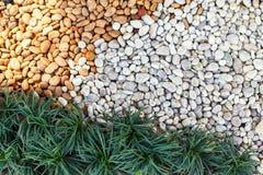 使植物和草环境美化的组合 免版税库存照片