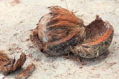 使椰子靠岸 免版税图库摄影