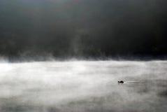 鸭子和雾 免版税库存图片