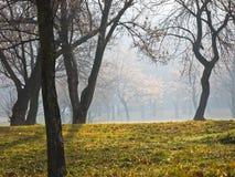 使模糊在晴朗的秋天早晨在Kalemegdan公园,贝尔格莱德 免版税图库摄影