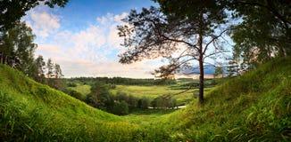 使河谷的全景环境美化有一棵孤独的杉木的 免版税库存照片