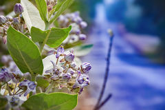 使沼泽地、沼泽、小河或者河床环境美化场面与绿色 库存照片