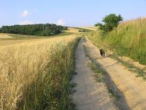 使波兰环境美化 库存图片