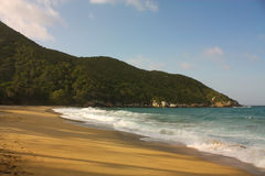 使热带加勒比哥伦比亚的森林靠岸 库存图片