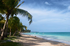使热带的巴西靠岸 免版税图库摄影