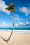 使热带的棕榈树靠岸 免版税库存照片