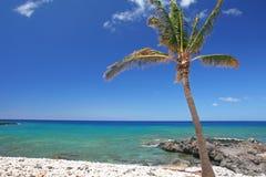 使热带的棕榈树靠岸 免版税库存图片