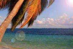 使热带的棕榈树靠岸 库存照片