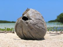使热带的漂流木头靠岸 免版税库存照片