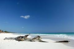 使热带的漂流木头靠岸 免版税库存图片