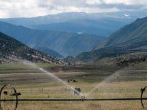 使牧场环境美化,母牛,喷水隆头场面  免版税库存图片