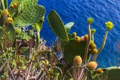 使特内里费岛Summer Playa de Las Teresitas大西洋风景山村城市手段视图靠岸 免版税图库摄影