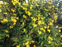 使用一片黄色花和绿色叶子在多小组 库存图片