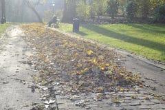 使用下落的叶子在秋天公园,比利时, 12月 2013年 免版税库存图片