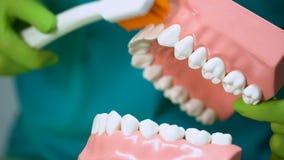 使用下颌嘲笑和牙刷的牙医教牙耐心正确清洁  影视素材