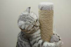 使用与一个软的玩具的小猫 库存图片