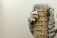 使用与一个软的玩具的小猫 库存照片