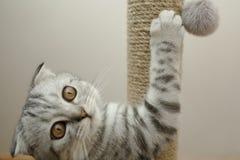 使用与一个软的玩具的小猫 图库摄影
