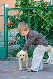 使用与一只小狗拉布拉多的小男孩在公园 图库摄影