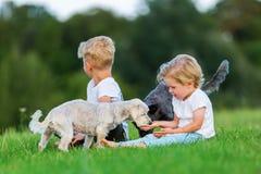 使用与两条小狗的两个年轻男孩户外 库存图片